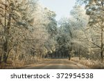 tree.winter forest | Shutterstock . vector #372954538