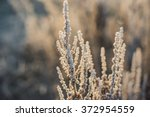 cold | Shutterstock . vector #372954559