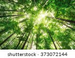 beautiful nature at morning in... | Shutterstock . vector #373072144