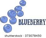 hand drawn sketch blueberry.... | Shutterstock .eps vector #373078450