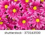 Daisy Flower   Spring Flower...