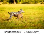 zebra and its baby cub in the... | Shutterstock . vector #373380094