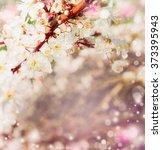 spring blossom in garden or...   Shutterstock . vector #373395943