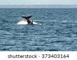 orca jump | Shutterstock . vector #373403164
