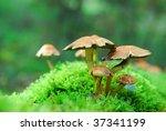 Group Of Magic Mushrooms On...