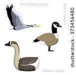 Bird Goose Set Cartoon Vector...