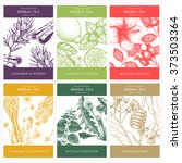 botanical collection of... | Shutterstock .eps vector #373503364