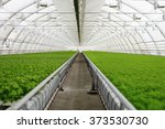 Organic Greenhouse. Young...