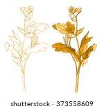 celandine   wild flower   herb  ... | Shutterstock . vector #373558609