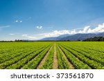 organic farm land crops in... | Shutterstock . vector #373561870