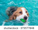 little beagle dog period toy... | Shutterstock . vector #373577848