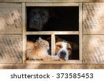Stock photo funny company of two dogs and little kitten looking out the window of little house 373585453