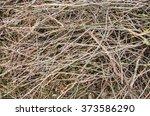Brown Tree Branch. Dry Branch....