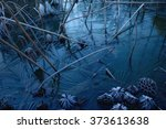 Winter Scenery  Withered Lotus...