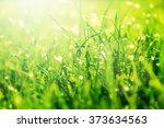 Grass Bokeh. Beauty Nature...