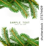 pine branches isolated on white ... | Shutterstock . vector #37374409
