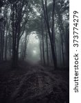 path in dark misty forest | Shutterstock . vector #373774279