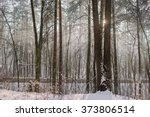 winter foggy morning | Shutterstock . vector #373806514