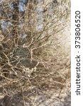 gold winter | Shutterstock . vector #373806520
