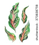 Watercolor Leaves Cordyline...