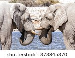 View Of Two Elephants Face To...