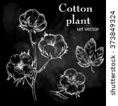 hand drawn cotton plant in... | Shutterstock .eps vector #373849324