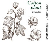 hand drawn cotton plant in... | Shutterstock .eps vector #373849330