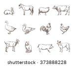 farm animals | Shutterstock . vector #373888228