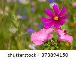 wildflowers on a meadow in a...   Shutterstock . vector #373894150