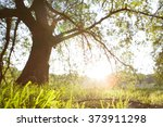 spring meadow with big tree... | Shutterstock . vector #373911298