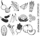 set of hand drawn vegetables...   Shutterstock .eps vector #373929910