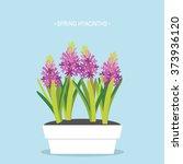 spring hyacinths flat vector...   Shutterstock .eps vector #373936120