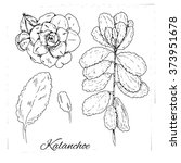 Set Of Medicinal Herbs. Black...