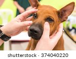 veterinarian check the dog's... | Shutterstock . vector #374040220