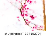 wild himalayan cherry  thailand | Shutterstock . vector #374102704