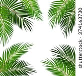 Stock vector palm leaf vector background illustration eps 374163730