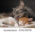 Stock photo cat washes language of a small kitten portrait of a big cat lovely loving relationship care and 374170978