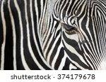close up of a zebra | Shutterstock . vector #374179678