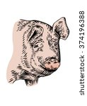 drawing of isolated head of pig ... | Shutterstock .eps vector #374196388