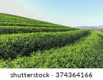 beautiful fresh green tea... | Shutterstock . vector #374364166