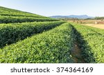 beautiful fresh green tea... | Shutterstock . vector #374364169