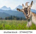 Goat Portrait On A Green Summe...