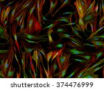 real fluorescence microscopic... | Shutterstock . vector #374476999