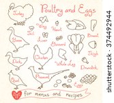set drawings of poultry and egg ...   Shutterstock .eps vector #374492944