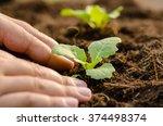 close up farmer hand planting... | Shutterstock . vector #374498374
