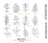 hand drawn herbs and spices... | Shutterstock .eps vector #374540758