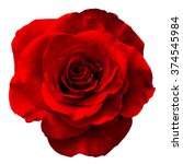 red rose isolated on the white... | Shutterstock . vector #374545984