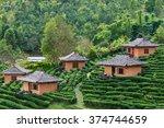 Tea Plantation And Hut In Ban...
