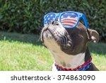 boston terrier dog looking cute ... | Shutterstock . vector #374863090