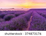 beautiful landscape of lavender ... | Shutterstock . vector #374873176